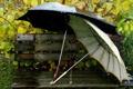 Картинка дождь, листя, вода, зонт, скамейка