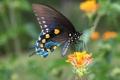 Картинка цветок, макро, природа, бабочка, крылья, мотылек