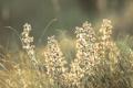 Картинка поле, макро, свет, роса, блики, свечение, растения