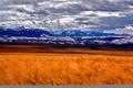 Картинка поле, небо, облака, снег, горы, колосья