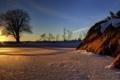 Картинка зима, снег, закат, дерево
