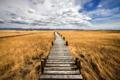 Картинка пейзаж, поле, мост