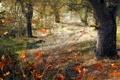 Картинка деревья, лес, осень, рендеринг