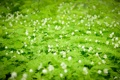 Картинка зелень, цветы, природа