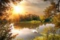 Картинка осень, деревья, природа, озеро, лебедь, время года
