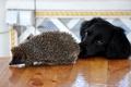 Картинка иголки, стол, собака, мордочка, ёжик, пёс