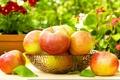 Картинка яблоки, фрукты, корзинка, листики