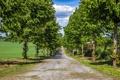 Картинка пейзаж, деревья, дорога