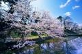Картинка весна, водоем, цветущая сакура