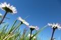 Картинка лето, небо, трава, цветы