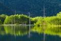 Картинка лес, деревья, горы, озеро, склон