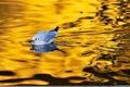 Картинка природа, птица, вода, отблеск