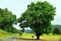 Картинка деревья, дорога, природа, поле, горы, зелень