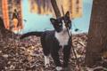 Картинка кот, котяра, кошак, прогулка