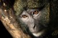 Картинка природа, обезьяна, Swamp Monkey