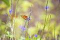 Картинка бабочка, чветы, насекомое, макро