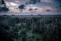Картинка ночь, природа, болото
