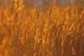 Картинка поле, осень, трава