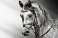 Картинка head, horse, eyes