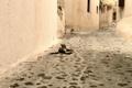 Картинка котенок, серый, улица, лежит