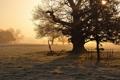 Картинка поле, туман, дерево, утро