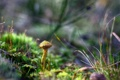 Картинка осенний лес, трава, макро, грибы