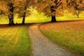 Картинка трава, листья, деревья, природа, дорожки, дорожка, красивые обои для рабочего стола