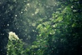 Картинка цветы, природа, дождь, кусты