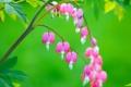 Картинка листья, природа, ветка, экзотика