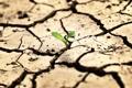 Картинка жизнь, росток, засуха, трещены