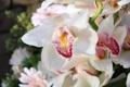 Картинка цветы, орхидеи, цветение