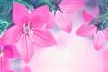 Картинка листья, вода, отражение, лепестки, колокольчик, цветение