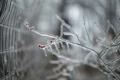 Картинка макро, природа, лёд, ветка