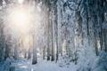 Картинка зима, лес, снег, деревья, пейзаж, природа