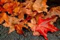 Картинка осень, макро, земля, листва, мокрая