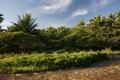 Картинка джунгли, зелень, трава, речка, пальмы