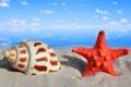 Картинка песок, море, макро, природа, ракушка, морская звезда