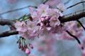 Картинка природа, весна, ветка