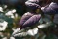 Картинка капли, ветка, листва, макро, роса