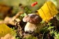 Картинка макро, гриб, листва, фото