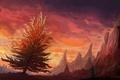 Картинка закат, природа, люди, дерево, скалы