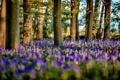 Картинка листья, деревья, цветы, ветки, голубые цветы