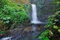 Картинка лес, деревья, река, камни, заросли, водопад, поток