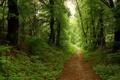 Картинка лес, дорога, лето