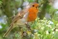 Картинка листья, природа, ветка, птичка