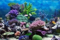 Картинка подводный мир, underwater, ocean, fishes, tropical, reef, coral