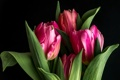 Картинка тюльпаны, бутоны, чёрный фон
