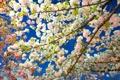 Картинка небо, деревья, ветки, весна, сад