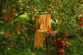 Картинка природа, травы, яблоки, дерево
