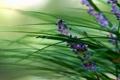 Картинка зелень, трава, макро, цветы, размытость